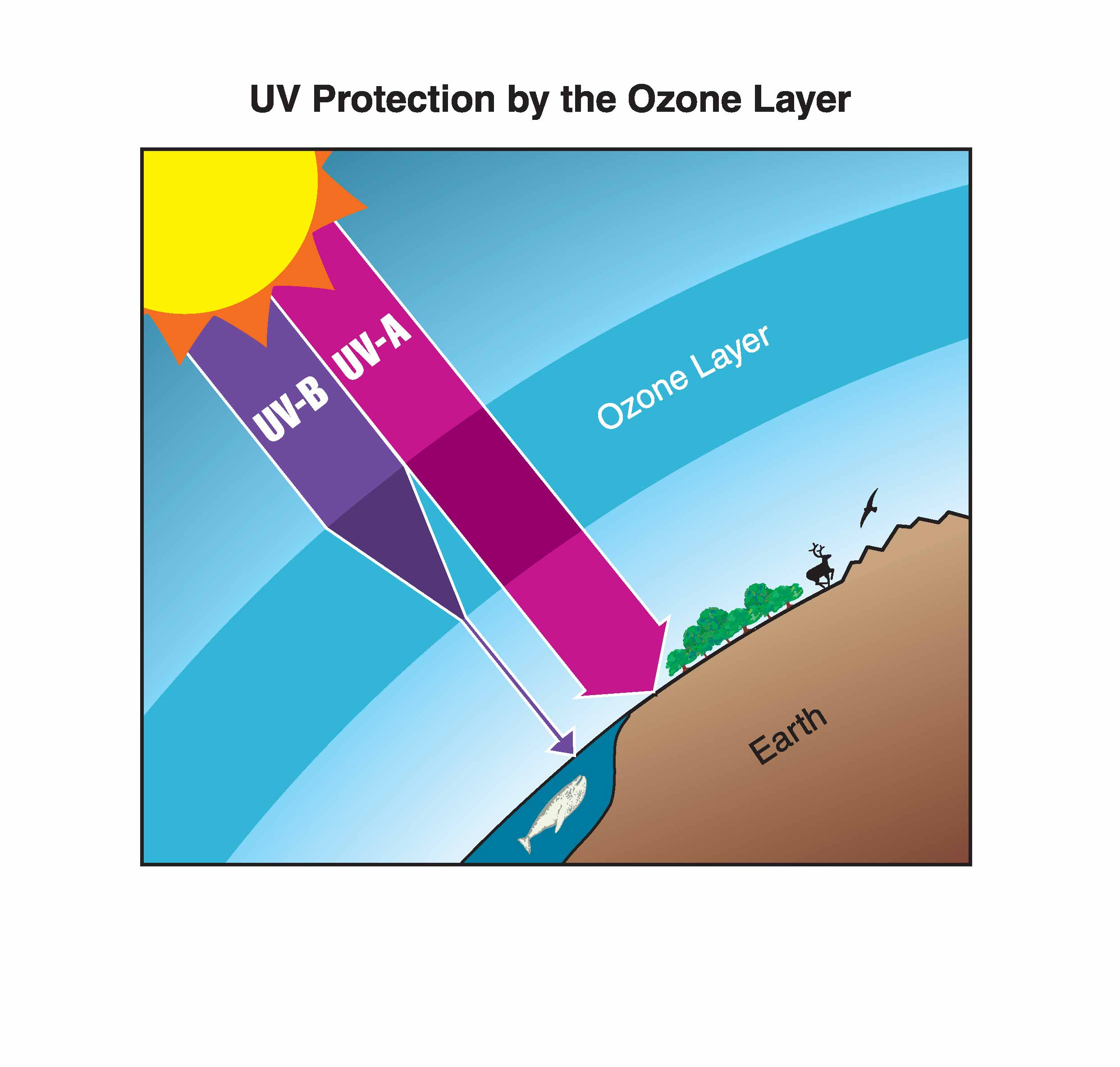 utra violet radiation essay Ultraviolet radiation is the electromagnetic radiation that has wavelengths in the range between 4000 angstrom units (å), the wavelength of violet light, and 150 å, the length of.