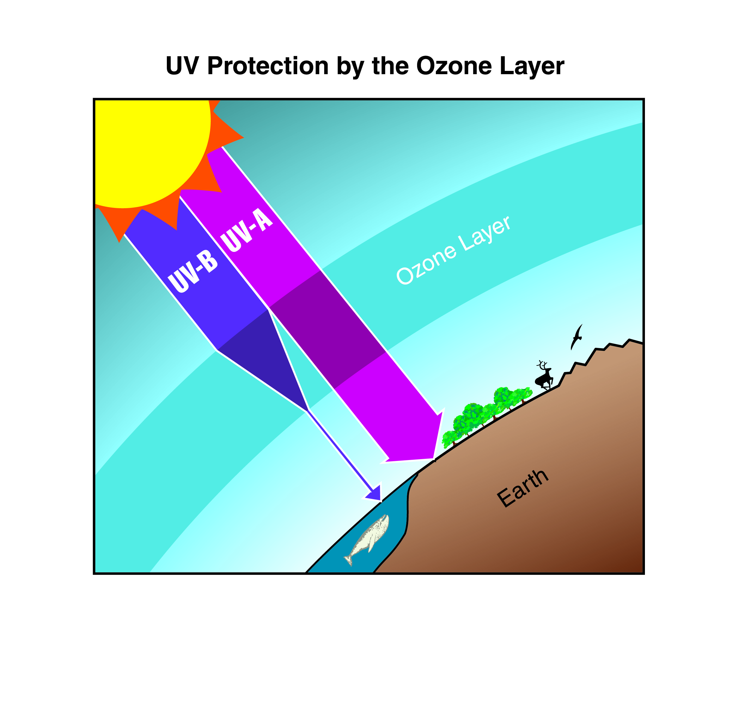 a discussion of the effects of a depleted ozone layer The main consequence of a depleted ozone layer is a reduction in the protection it affords against harmful ultraviolet radiation (uvb) emanating from the sun according to the environmental.