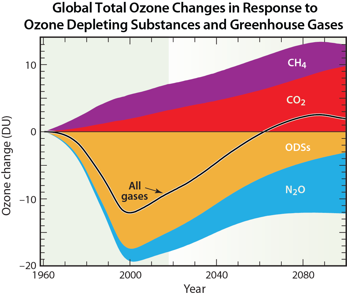 Global Total Ozone Changes in Response to Ozone Depleting Substances and Greenhouse Gases